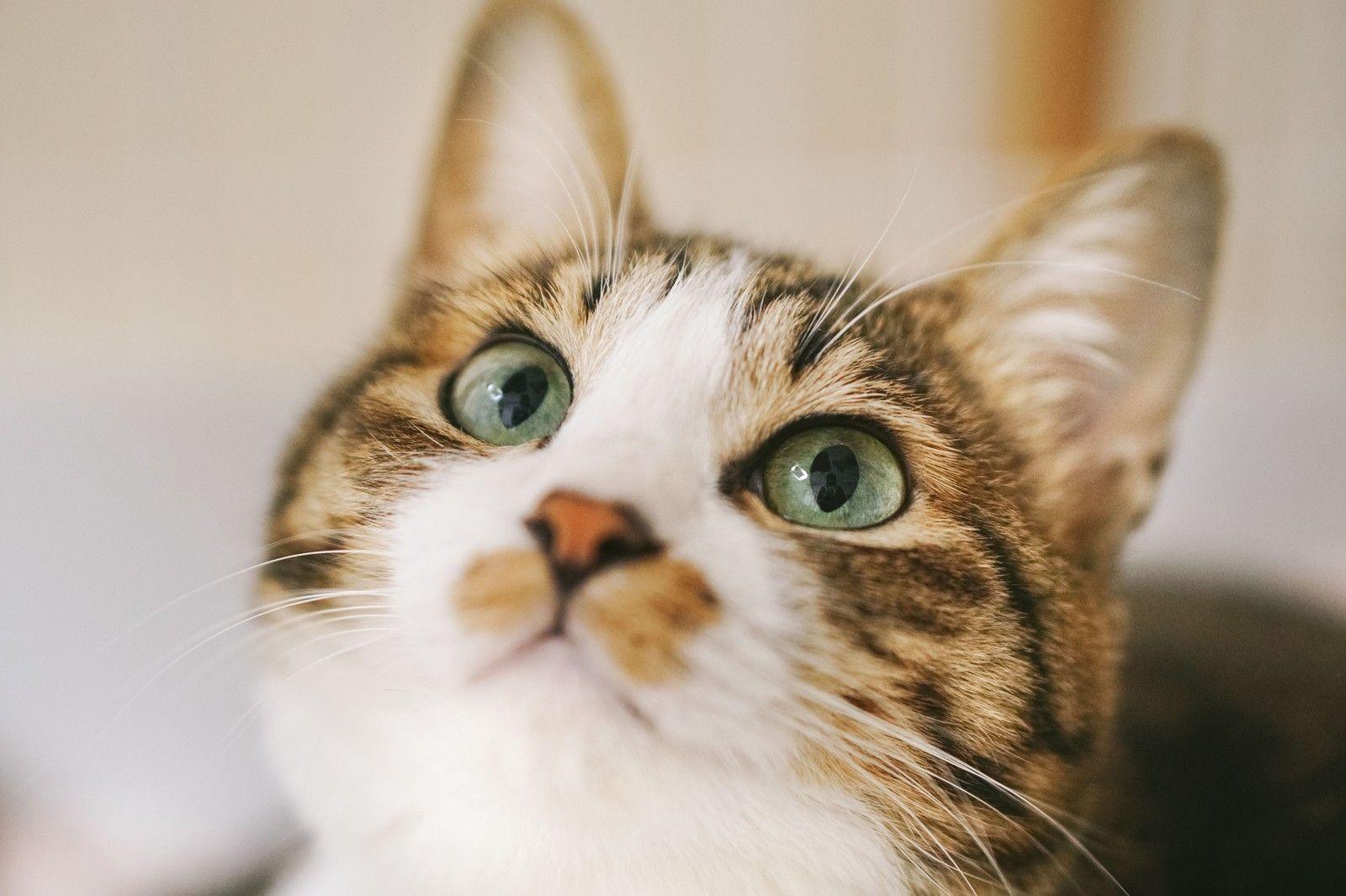 猫画像掲示板オープンです
